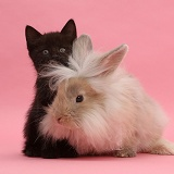 Black kitten and fluffy bunny